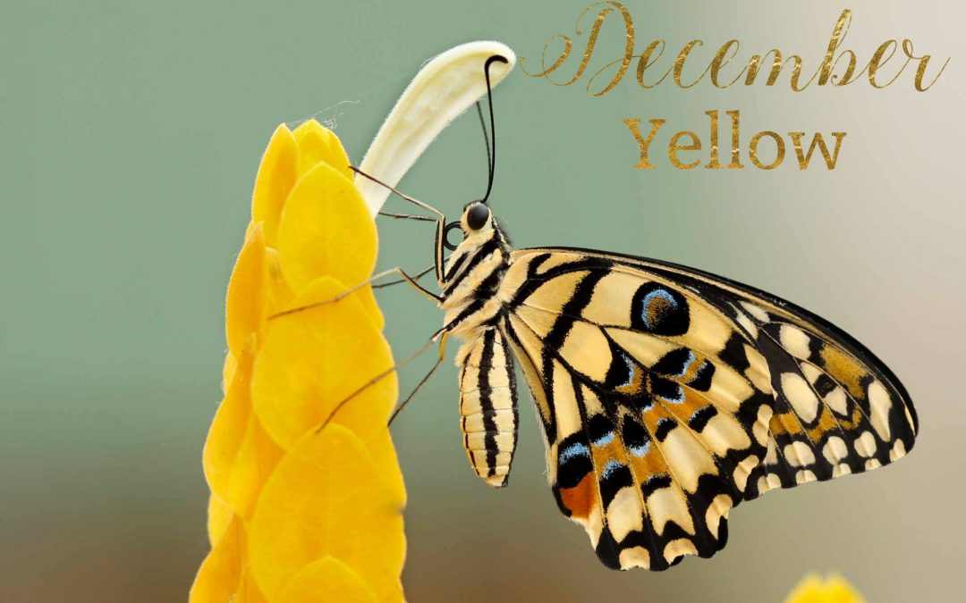 Your Colour For December – Yellow